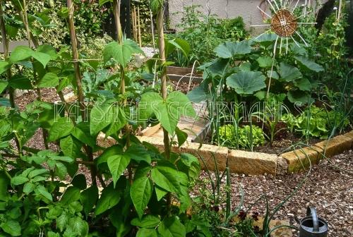 jardin de cure INSCR.jpg