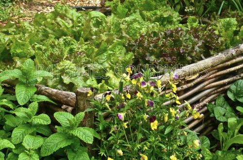 mini jardin INSCR.jpg