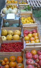 etalage tomates.jpg